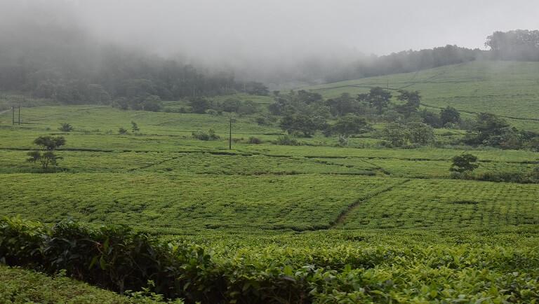 כדאיות רכישת קרקע חקלאית