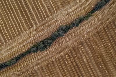 איחוד וחלוקת קרקעות חקלאיות